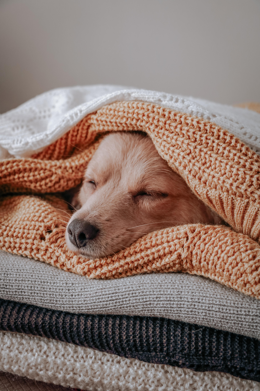 Puppy sleeping under blankets